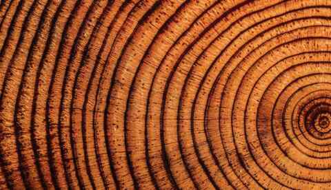 Core of a tree trunk